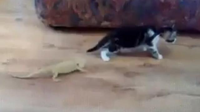 진짜 감짝 놀란 고양이 반응