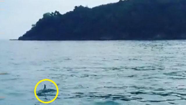 한국 바다에서 보기 어려운 동물