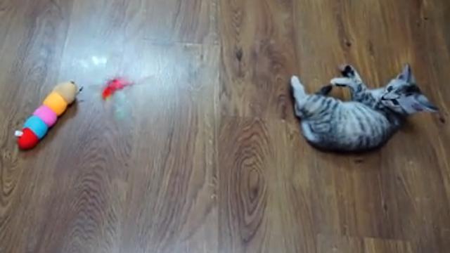 고양이의 사냥 실력 어떤가요?