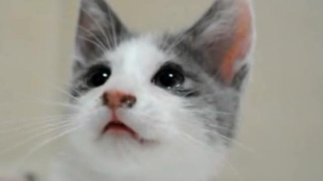 이목구비 뚜렷 고양이계 미인