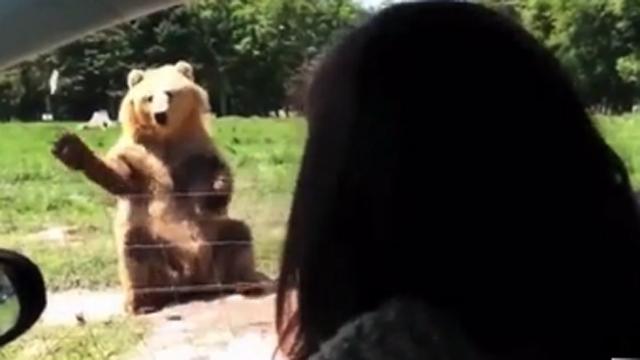 이런 거 봤어? 곰 나이스 캐치