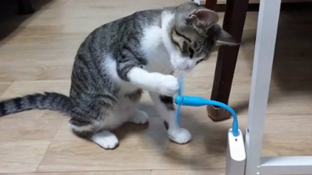 샤오미를 즐길 줄 아는 고양이
