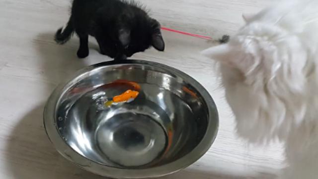 고양이에게 생선을 맡기는 격