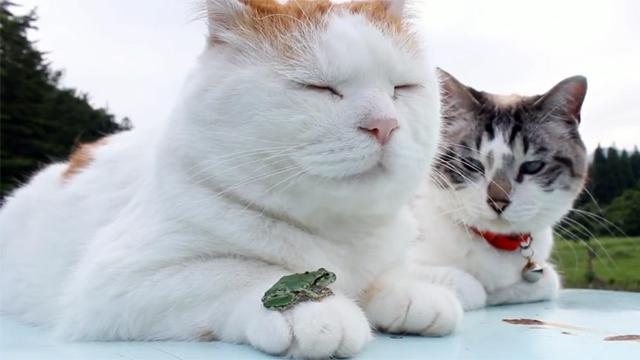 개구리, 자네 거기서 뭐 하는가