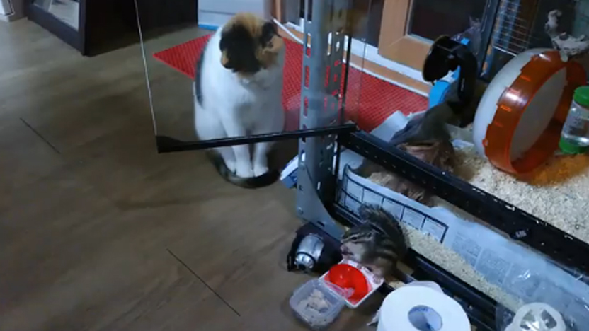 다람쥐 보는 고양이의 생각은?