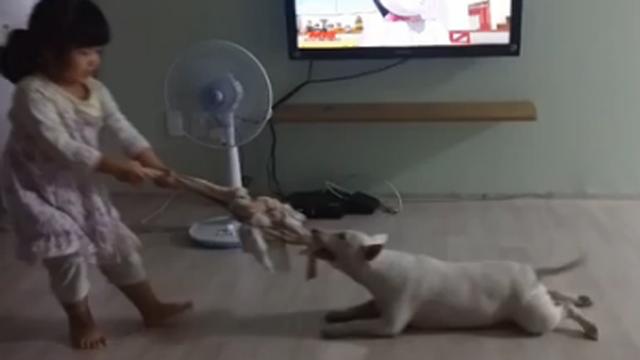 아기 vs 강아지 결투의 승자는?
