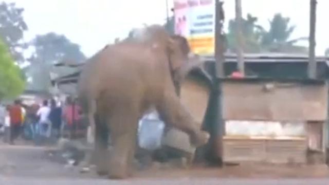 인도의 마을을 습격한 코끼리