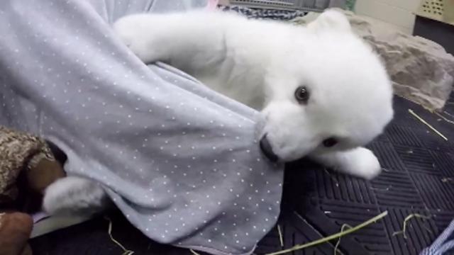 3개월 만에 폭풍 성장한 북극곰