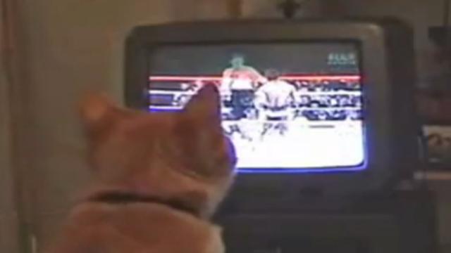 전생에 권투선수였던 고양이
