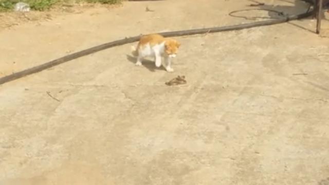 길에서 마주친 고양이 vs 뱀