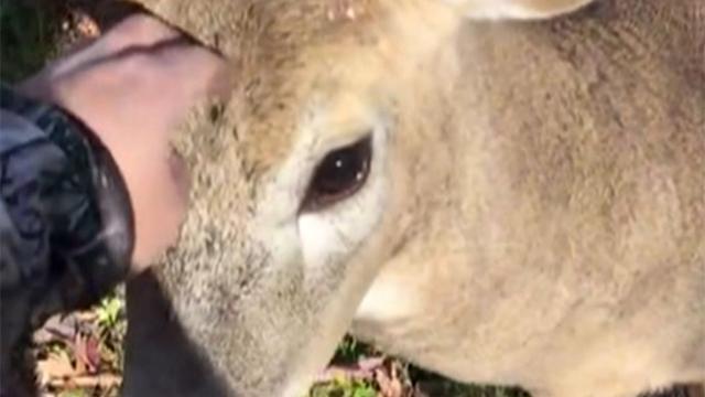 사냥꾼을 만난 사슴 충격 반전