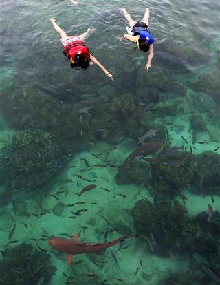 말레이시아 랑카위 : 상어와 함께 스노클링, 소름이 으스스 침이 꼴깍
