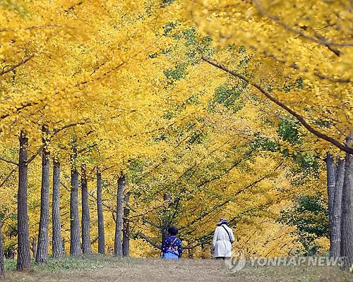 전국 '숲 여행지'