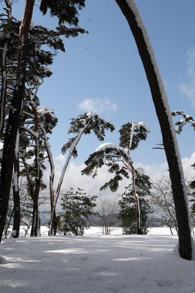 초당 솔밭 소나무초당 소나무숲
