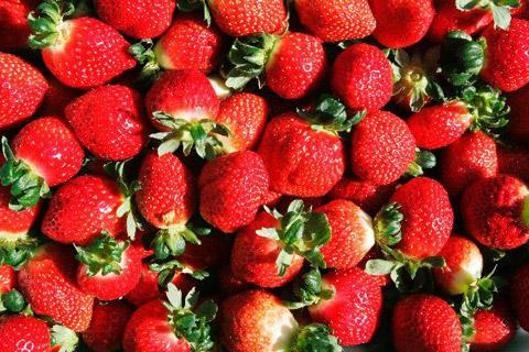 딸기 칼로리는 27kcal..하루에 10개 섭취가 적당