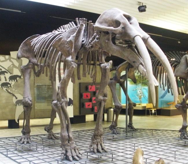 지구에서 가장 오래 생존한 포유동물은?