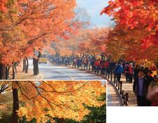 당신의 10월을 위해 엄선한 가을 축제 10곳
