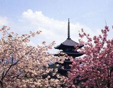 가까운 나라奈良에서 '봄날의 산책'